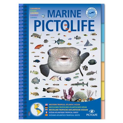 pictolife-caraibes